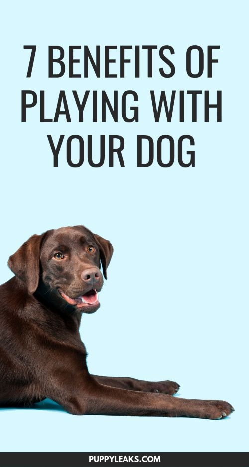7 Benefits Of Playing With Your Dog Dog Training Techniques Dog
