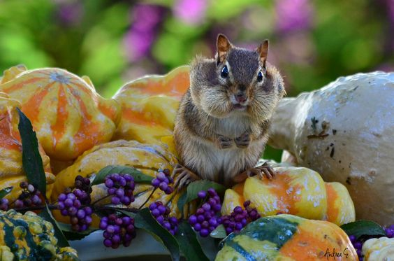 Hey you with the camera!!  Give me a break... I'm on my lunch!! by Andrea Everhard