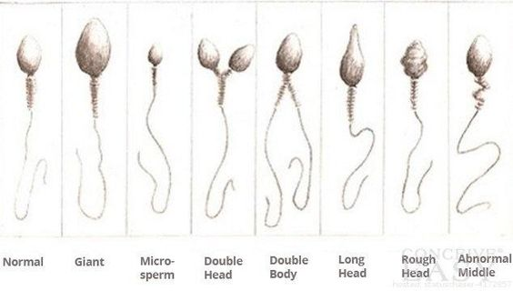Facts You Didn't Know About Sperm: