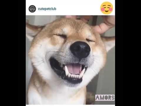 Perrito siendo mimado :3 - YouTube