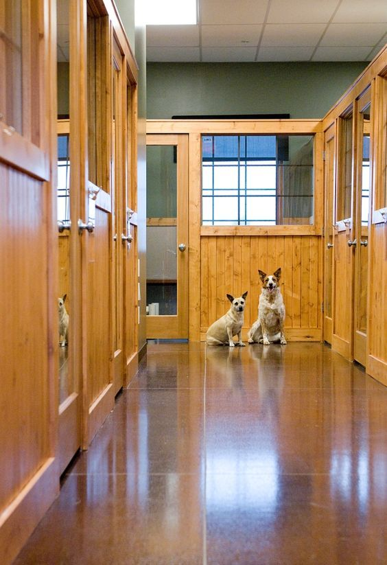 Virtual Tour Dogwoods Lodge Dog Boarding Kennels Pet Hotel Pet Resort
