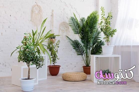 أكثر من صورة لتجددي من ديكور المنزل بالنباتات ديكورات زرع داخل المنزل ديكور زرع داخلي Plants