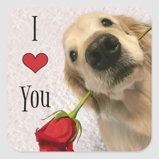 Golden Retriever Puppies For Sale 2021 Ireland