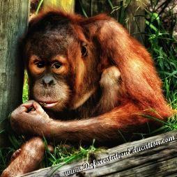 Deforestation Education - Palm Oil Education