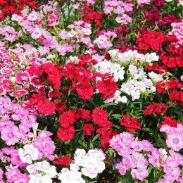Low maintenance plants for sunny areas low maintenance for Low maintenance outdoor potted plants