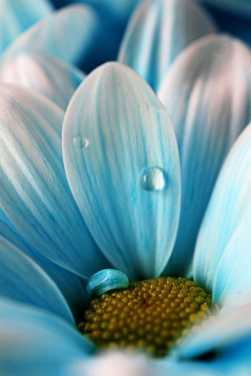 A drop in the ocean... • photo: Marsaliath on Flickr - i like the effect that the raindrop has given on the petal and the deep detail on the flower.