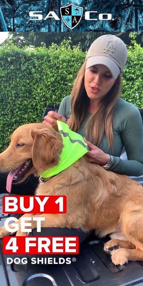 Dog Training Tips Quail Dog Training Dog Training 55434 Best