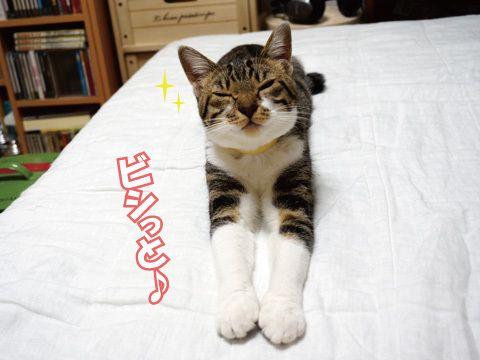 ビシッとね♪|うにオフィシャルブログ「うにの秘密基地」Powered by Ameba