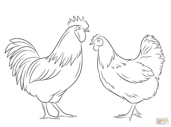 hen drawings outline