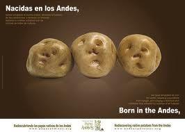 Resultado de imagen para Papas andinas