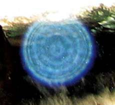 "✨Blue Orb in Las Vegas Nevada✨ When you are ""tuned in"" to orbs, you are connecting to your own spirit. You are experiencing your expanded self. In your space alone, you sense the unseen presence that guides you and provides for you, and is within you. This presence is telepathic and connected — a certain knowing that whatever is, is perfect in the moment.:"