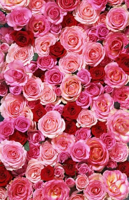 Real roses full background wallpaper google search