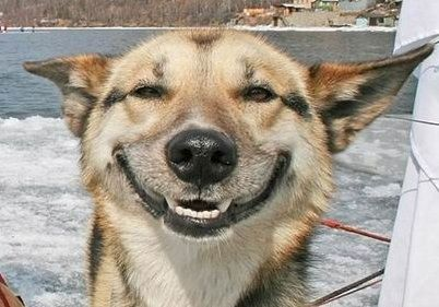 Another smiling dog!