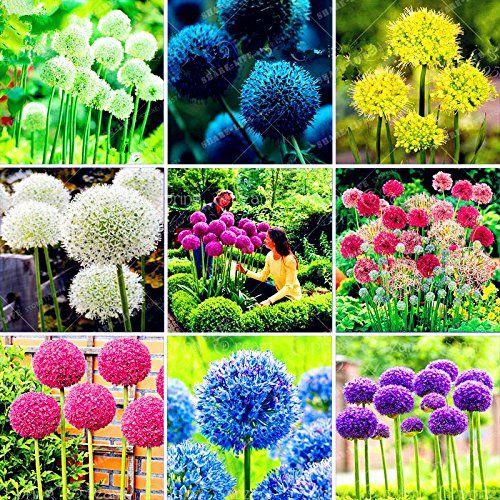 Pin Auf Blumenzwiebeln Jetzt Pflanzen