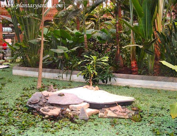 Tropical and madrid on pinterest - Estanques de jardin ...