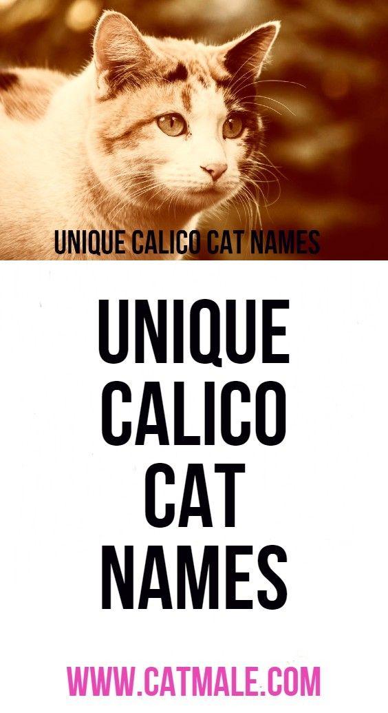 Unique Calico Cat Names In 2020 Calico Cat Names Cat Names Calico Cat