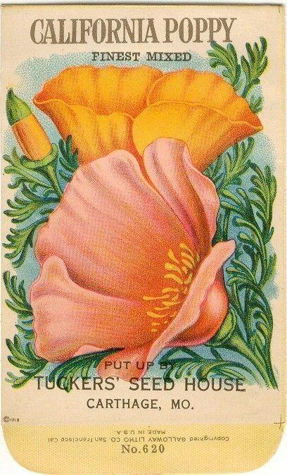 vintage botanical graphics: vintage flower seed packets