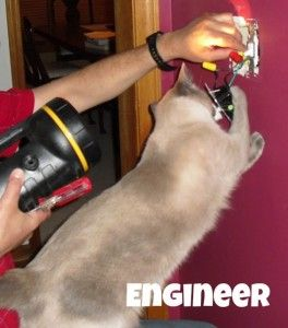 Careers for Cats - Engineer