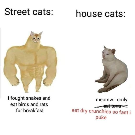 The Second One Is My Cat