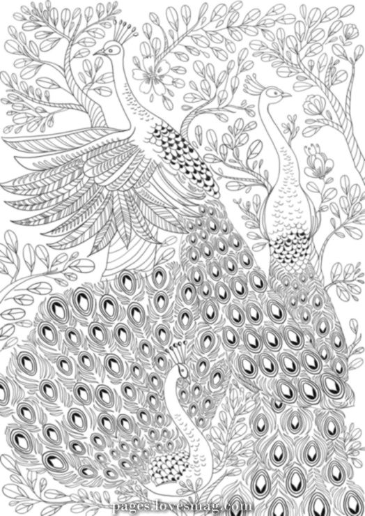 Spectacular 37 Gallery Ru Picture 6 Antistress Elena 72 Peacock Coloring Pages Detailed Coloring Pages Coloring Pages