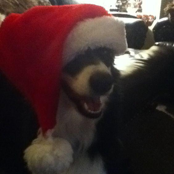 Santa dog!!!!!! <3