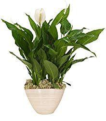 Die 8 Besten Zimmerpflanzen Fur Dein Schlafzimmer Pflanzen Zimmerpflanzen Einblatt