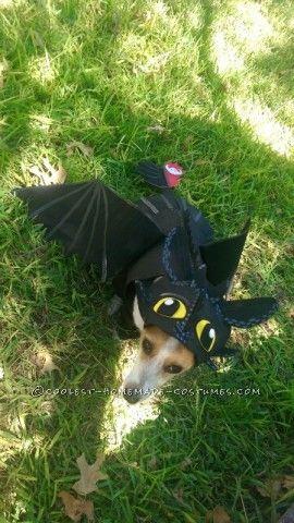 dog dressed up like a dragon