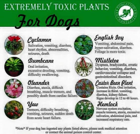 Dogs Plants And For Dogs On Pinterest