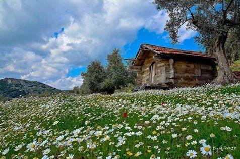 Mi Universar: Primavera en el campo