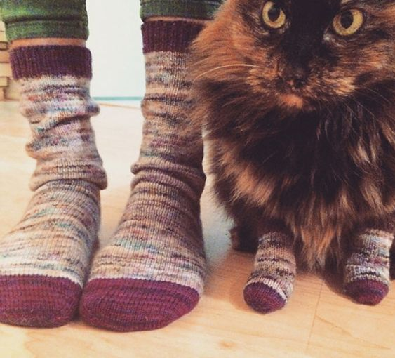 Knitting Pattern For Cat Socks : If you love the idea of wearing matching socks with your ...