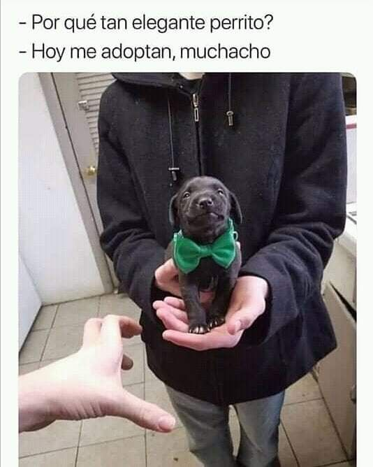 Pin De Alexis Duran En Aww Perros Love Dogs Perrito