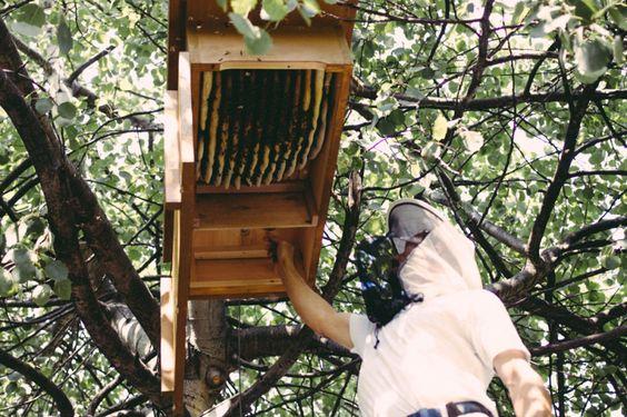 Urban Beekeeping, finding #Berlin, Prinzessinnengärten More information on Berlin: visitBerlin.com