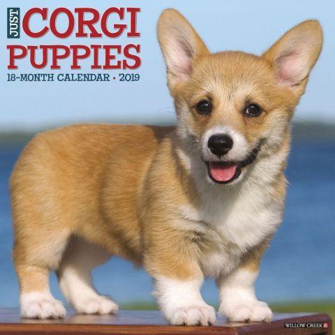 Corgi Puppies 2019 Wall Calendar Corgi Puppy Corgipuppies Corgi Corgipuppy Corgi Puppies Corgi Funny
