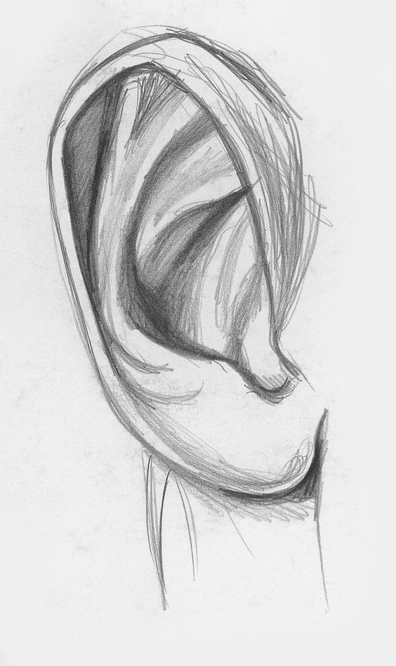 60 Simple Pencil Drawing Sketch Exercise Page 21 Of 61 Art Is A Means Of Expressing Things The Pencil Drawings Easy Drawing For Beginners How To Draw Ears
