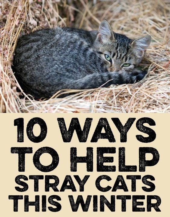 10 Ways To Help Stray Cats This Winter Feral Cat Shelter Feral Cats Stray Cat
