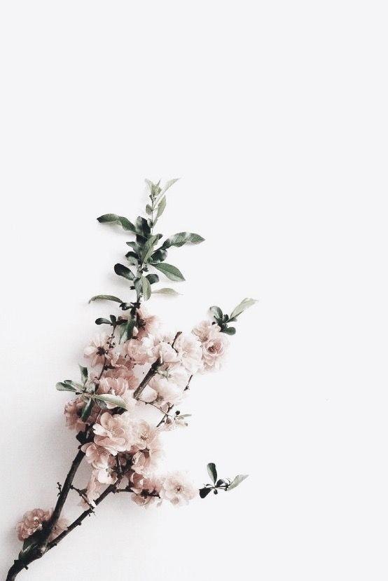 Minimalist Flower Phone Wallpaper