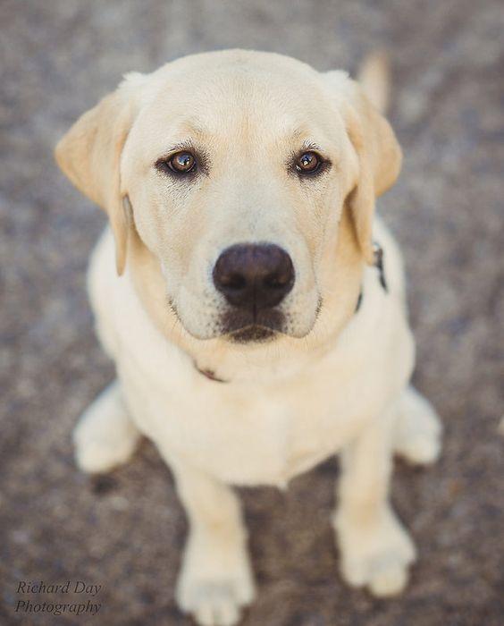 Puppy portraits