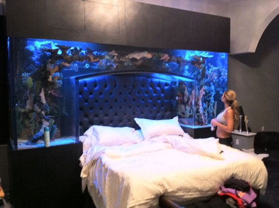 Ochocinco's bed - built into an aquarium - way too cool!