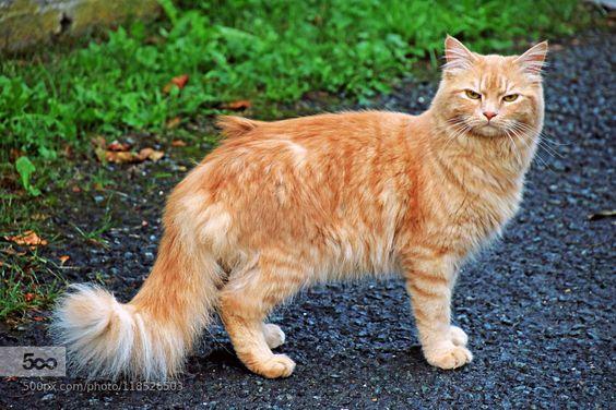 zenontheseas: Un grave chat par ik1wdc