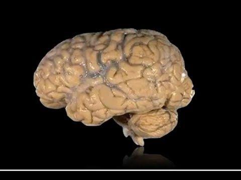 814 الجهاز العصبي عند الإنسان سنة 9 أساسي Youtube Hats Beanie
