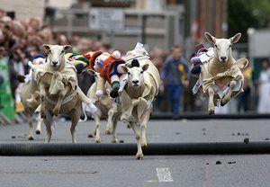 Woolly jumpers in Moffat