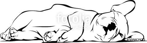 Liegender Frenchie Welpe French Bulldog Baby Sleeping