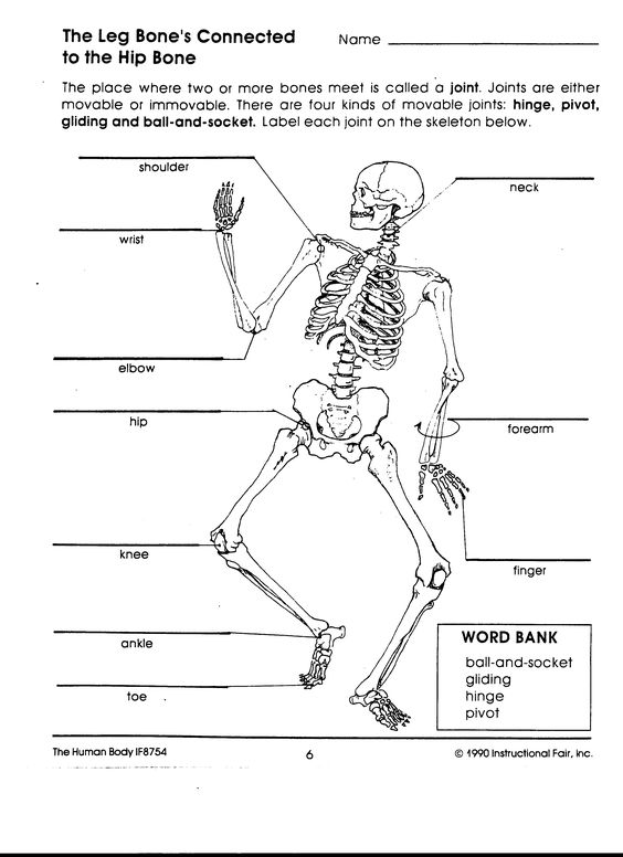 Worksheets Joint Worksheet joints of the body and human on pinterest worksheet google search