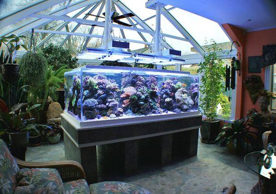 Best Aquarium Ideas Aquarium Design Pinterest San