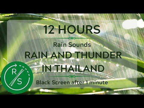 Rain Sounds 12hours Rain And Thunder In Thailand White Noise Rain To Sleep Nature Sounds Yo In 2020 Sound Of Rain Rain And Thunder Rain Sounds For Sleeping