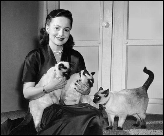 Olivia de Havilland. (There must have been a big Siamese Cat Sale in Hollywood in the 50s)