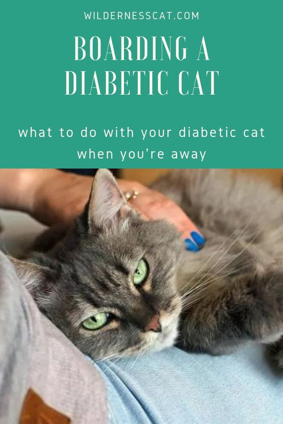 Boarding A Diabetic Cat What To Do With Your Diabetic Cat When You Re Away Cats Diabetes Types Of Insulin