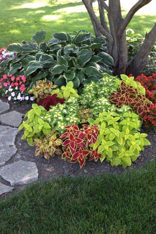 Shade Garden 9 Cheap Landscaping Ideas Shade Plants Front Yard Landscaping