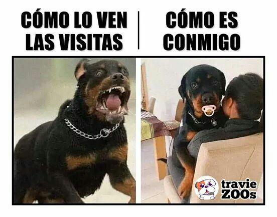 Pin De Katherin Alzate En Perro Memes De Perros Chistosos Memes Divertidos Memes Perros