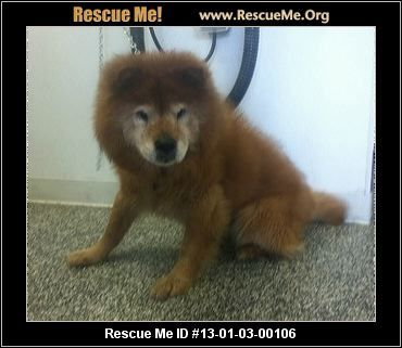 Bear  ID 13-01-00106  Middletown,New Jersey